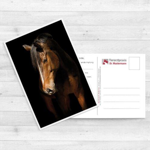 Friederike Scheytt Postkarten für Tierärzte - www.ruhmservice.de