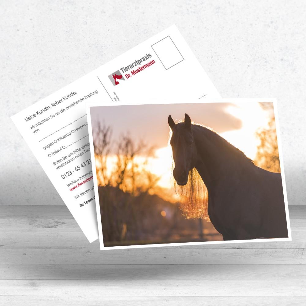 Erinnerungskarte Pferd Postkarten für Tierärzte - www.ruhmservice.de