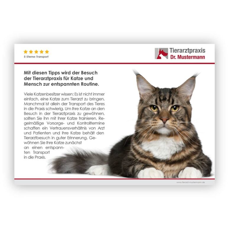 Tipps Transport Katzen Tierarzt