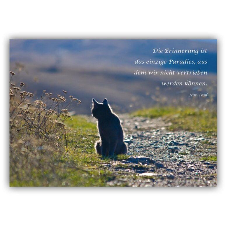 trauerkarte Katze trauerkarten box
