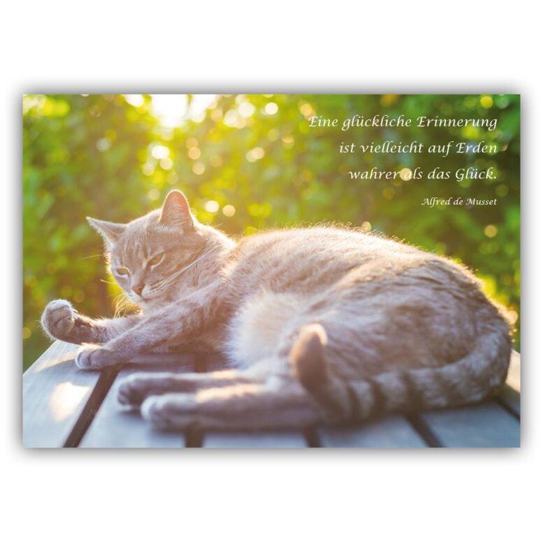 kondolenzkarte Katze