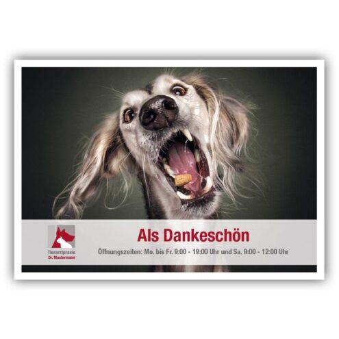 Karte Empfehlung Tierarzt