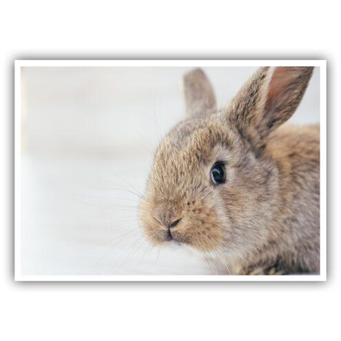 Fotomotiv Impferinnerung Postkarte Kaninchen