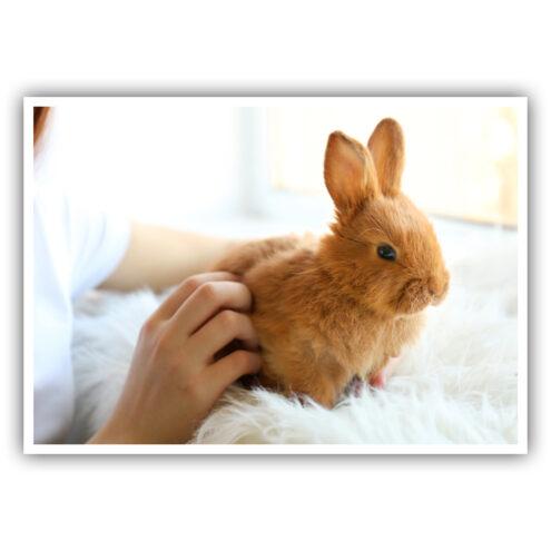 Motivansicht einer Postkarte mit einem Kaninchen für das Recall einer Tierarztpraxis
