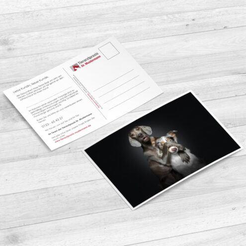 Mockup der Postkarte für Tierarztpraxen mit einem Hunde Motiv von Fotograf Christian Vieler