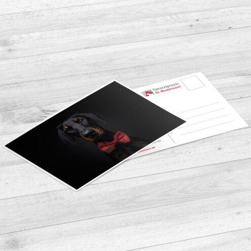 Muck der Postkarte für Tierarztpraxen mit einem Hunde Motiv von Fotograf Christian Vieler
