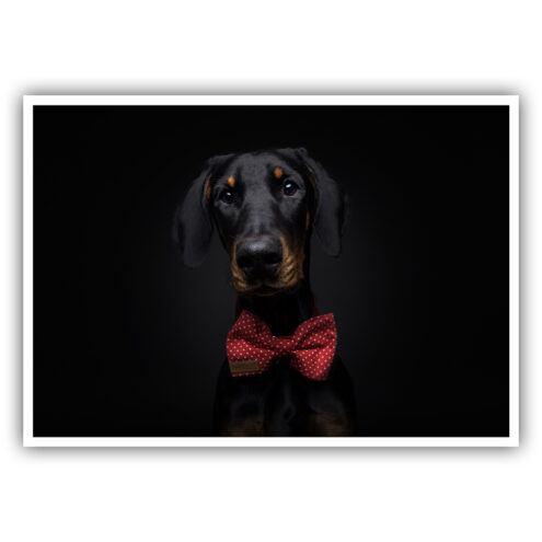 Postkarte für Tierarztpraxen mit einem Hunde Motiv von Fotograf Christian Vieler
