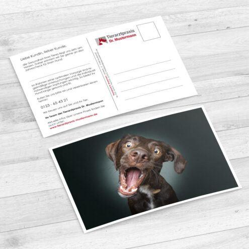 Mockup 25 Postkarte für Tierarztpraxen mit einem Hunde Motiv von Fotograf Christian Vieler