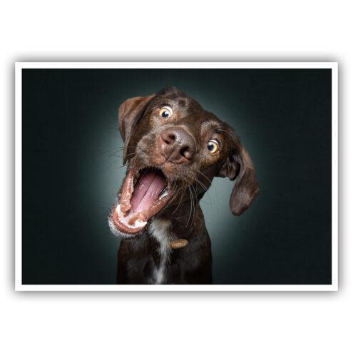 Postkarte für Tierarztpraxen mit einem Hunde Motiv von Fotograf Christian Vieler Mockup 25