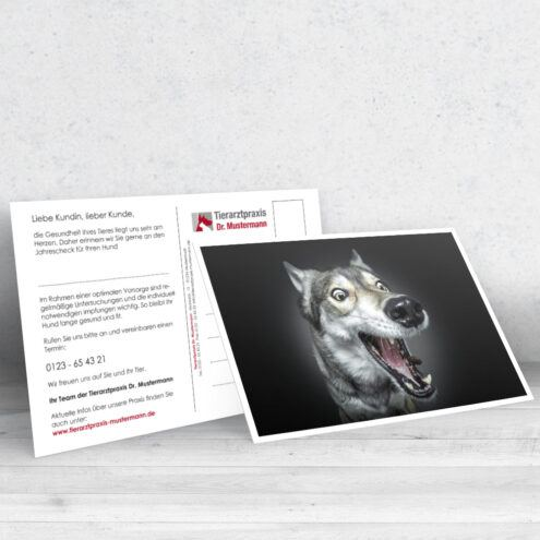 Mockup der Postkarte 26 für Tierarztpraxen mit einem Hunde Motiv von Fotograf Christian Vieler