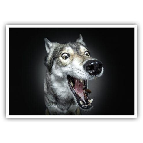 Postkarte 26 für Tierarztpraxen mit einem Hunde Motiv von Fotograf Christian Vieler