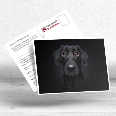 Mock der Postkarte 27 für Tierarztpraxen mit einem Hunde Motiv von Fotograf Christian Vieler