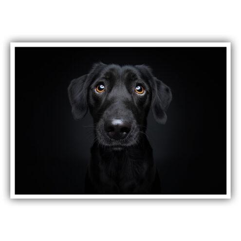 Foto 27 der Postkarte für Tierarztpraxen mit einem Hunde Motiv von Fotograf Christian Vieler