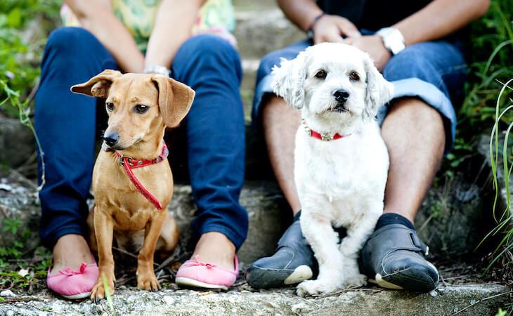 Weiterempfehlung einer tierarztpraxis als wichtige quelle für neue Kunden