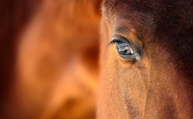 ruhmservice_kategorie_pferde_tierarztpraxis
